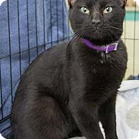 Adopt A Pet :: Miller - Merrifield, VA