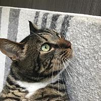 Adopt A Pet :: Mimi - Campbell, CA