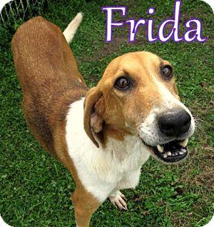 Hound (Unknown Type) Mix Dog for adoption in Georgetown, South Carolina - Frida