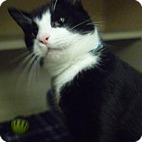 Adopt A Pet :: Gabe - Hamburg, NY