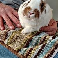 Adopt A Pet :: Pierre - Manchester, CT