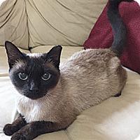 Adopt A Pet :: Persephone - Oakland, CA