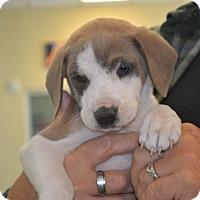 Adopt A Pet :: Flick - McKinney, TX