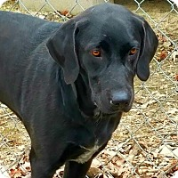Adopt A Pet :: Victor - pending - Manchester, NH