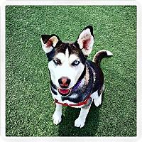 Adopt A Pet :: Layla - San Luis Obispo, CA