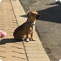 Adopt A Pet :: Gunner - Saddle Brook, NJ