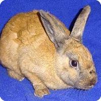 Adopt A Pet :: Darby - Woburn, MA