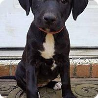 Adopt A Pet :: Precious - Mobile, AL