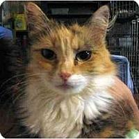 Adopt A Pet :: jewlz - Westfield, MA
