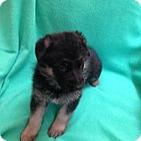 Adopt A Pet :: Maximillian - Victorville, CA