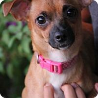Adopt A Pet :: Windy - Yuba City, CA