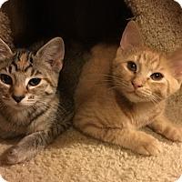 Adopt A Pet :: Rosebud - Chattanooga, TN