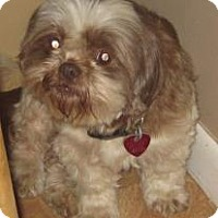 Adopt A Pet :: GIZZY - New palestine, IN