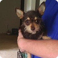 Adopt A Pet :: Rosie--ADOPTION PENDING - Baton Rouge, LA