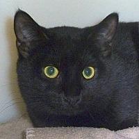 Adopt A Pet :: Dela - Carmel, NY