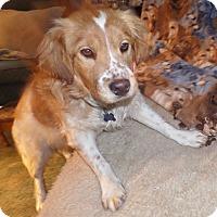 Adopt A Pet :: ROSCOE - Pine Grove, PA
