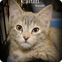 Adopt A Pet :: Caitlin - Springfield, PA