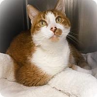 Adopt A Pet :: Rex - Webster, MA