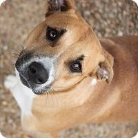 Adopt A Pet :: Precious Promise - Mahwah, NJ