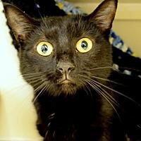 Adopt A Pet :: Tiny Tum - Philadelphia, PA