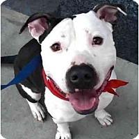 Adopt A Pet :: Sydney - Los Angeles, CA