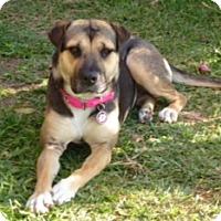 Adopt A Pet :: MARIE (adoption pending) - Irvine, CA