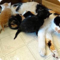 Adopt A Pet :: The Big Bang Bunch - Florence, KY
