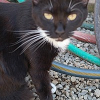 Adopt A Pet :: MISSY - San Pablo, CA
