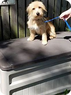 Terrier (Unknown Type, Medium)/Beagle Mix Dog for adoption in Pataskala, Ohio - Hope & Clyde