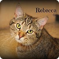 Adopt A Pet :: Rebecca - Glen Mills, PA