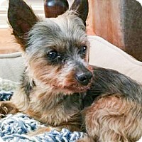 Adopt A Pet :: Norm 3415 - Toronto, ON