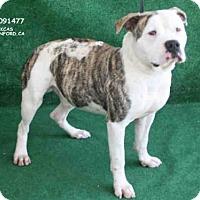 Adopt A Pet :: SPANKY - Hanford, CA