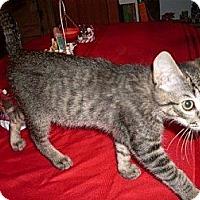Adopt A Pet :: Bally - Kirkwood, DE