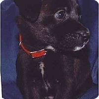 Adopt A Pet :: Dharma - Flint (Serving North and East TX), TX
