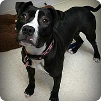 Adopt A Pet :: Emma - Muskegon, MI