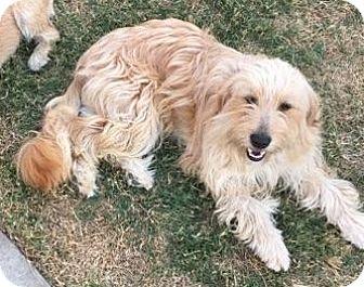 Terrier (Unknown Type, Medium) Mix Dog for adoption in Yorba Linda, California - Megan