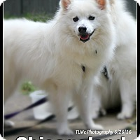Adopt A Pet :: Tasha - Elmhurst, IL