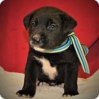 Adopt A Pet :: Petty ~ ADOPTED! - Saratoga Springs, NY
