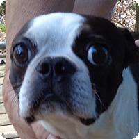 Adopt A Pet :: Nemo - Crump, TN