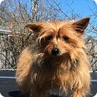 Adopt A Pet :: Lexi - Monterey, VA