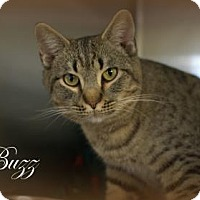 Adopt A Pet :: Buzz - Middleburg, FL