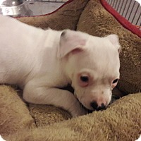 Adopt A Pet :: Frosty - Hainesville, IL