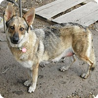 Adopt A Pet :: Kimber - Hagerstown, MD