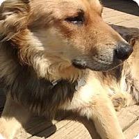Adopt A Pet :: Hercules - Brattleboro, VT
