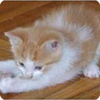 Adopt A Pet :: o/w boy - Etobicoke, ON