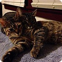 Adopt A Pet :: Jacyln & Kate - Modesto, CA
