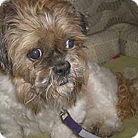 Adopt A Pet :: BENJI - Mahopac, NY