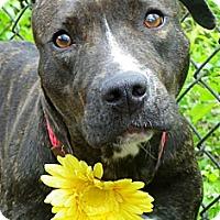 Adopt A Pet :: Neffie - Cleveland, OH
