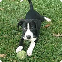 Adopt A Pet :: Hannah - Oliver Springs, TN