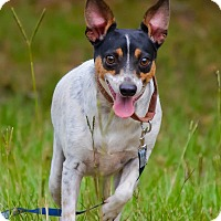 Adopt A Pet :: Lily Belle - Conyers, GA